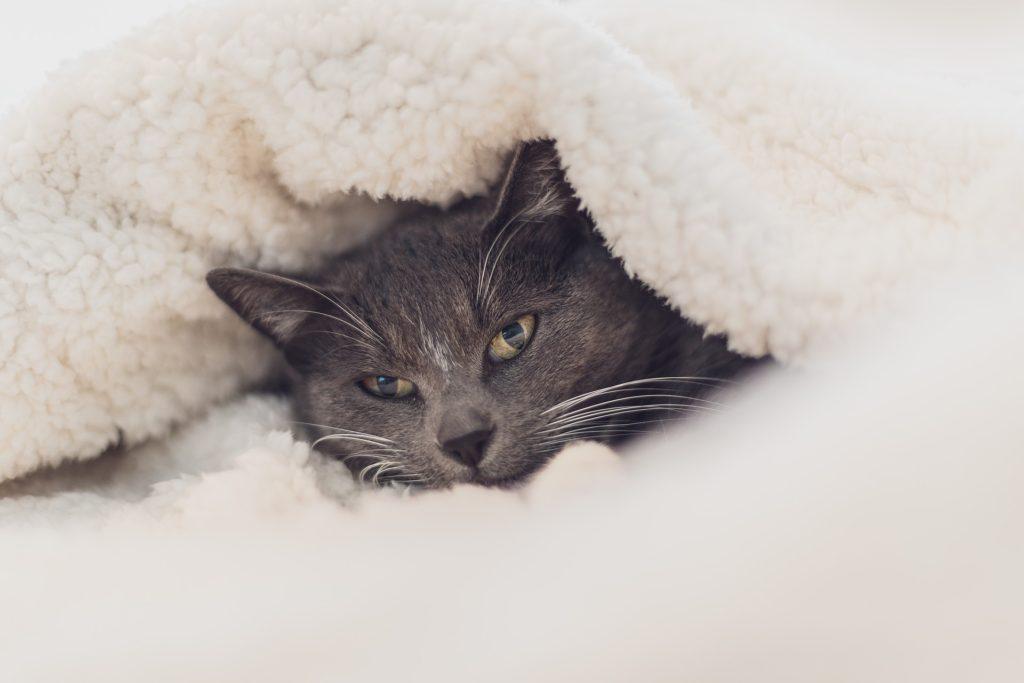 毛布の豆知識