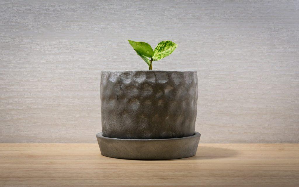 お洒落な植木鉢