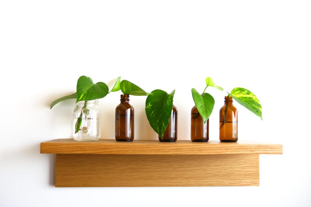棚に並んだ観葉植物 ビン差し